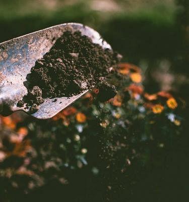 Potting Mix & Compost
